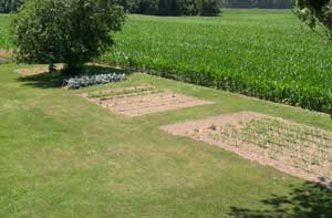 Our garden 040623