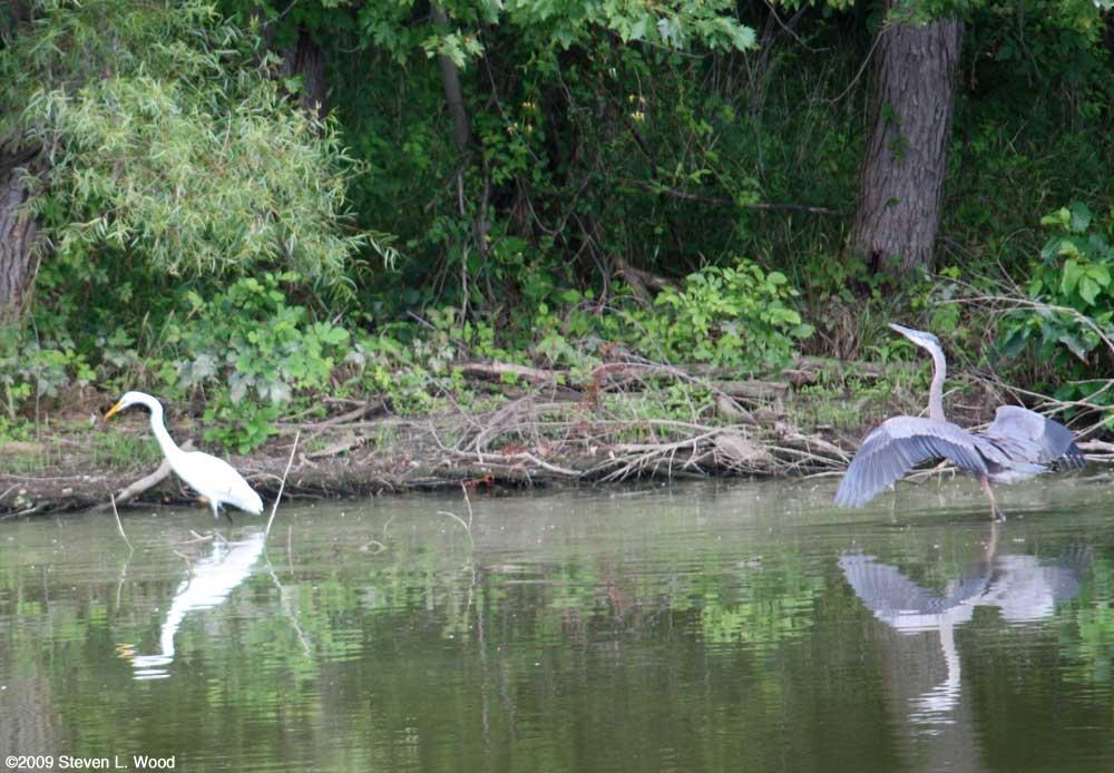Heron on Turtle Creek Reservoir