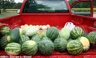 Melons for the Mission